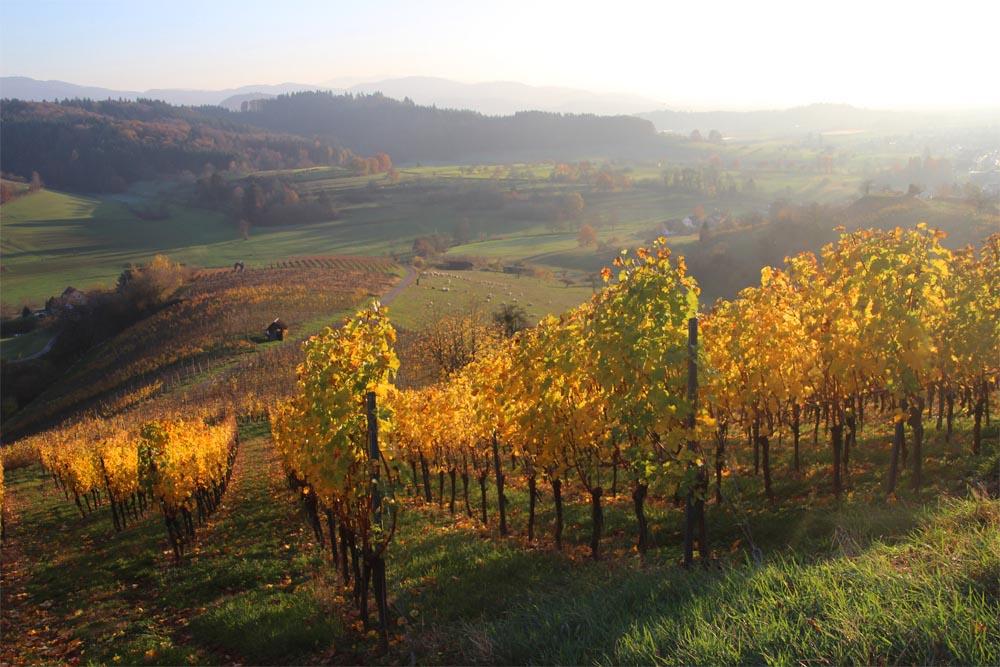 Bade viticole