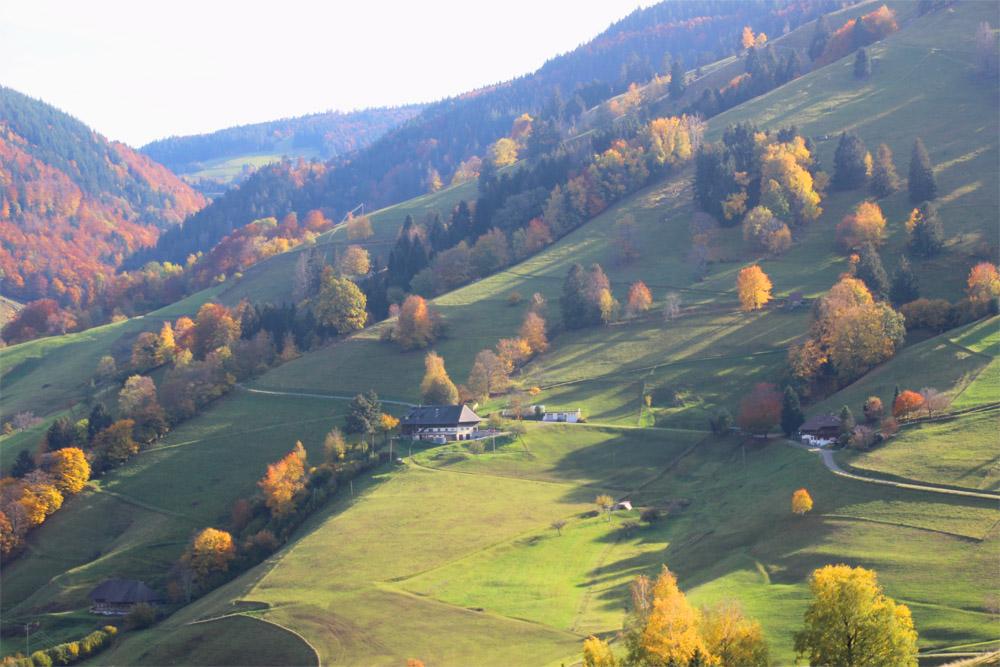 Forêt-Noire en automne